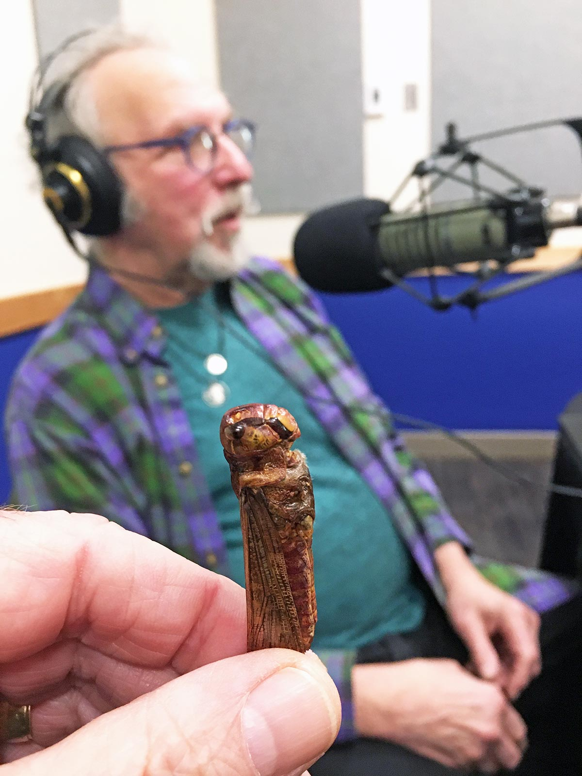 """With a locust in the foreground, """"Eat-a-Bug Cookbook"""" author David George Gordon talks about the benefits of eating insects."""
